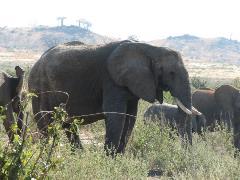 safari-img2502