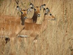 safari-img2506