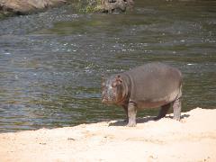 safari-img2535