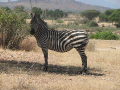 safari-img2541