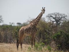 safari-img2550